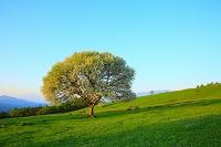 山梨県 八ヶ岳牧場 ヤマナシの花と青空