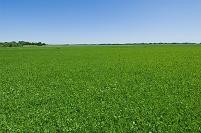 オランダ 緑の大地