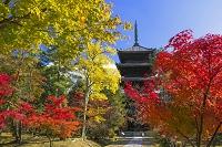 京都府 仁和寺 五重塔