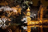 石川県 兼六園 瓢池の夜景