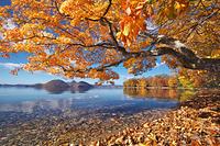 北海道 洞爺湖の紅葉と中島