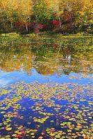 長野県 志賀高原 蓮池