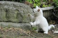愛知県 津島市 猫