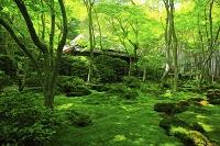 京都府 祇王寺 新緑の苔庭と草庵