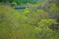 山梨県 新緑の小海線 清里~野辺山