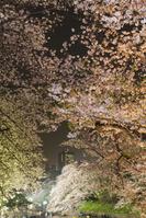 東京都 千鳥ヶ淵縁道夜桜ライトアップ