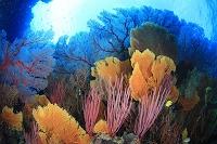 ニューカレドニア ポアンディミエ サンゴ礁