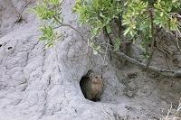 ボツワナ モレミ野生動物保護区