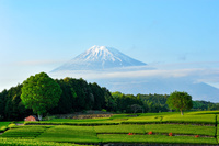 静岡県 富士市大渕笹場から見た富士山