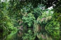 コスタリカ トルトゥゲーロ パーム運河