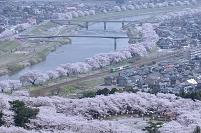 宮城県 白石川一目千本桜とJR東北本線