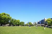 大阪府 中之島の芝生広場