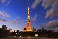 東京都 夕暮れ時の芝公園から見る東京タワー