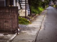 のんびりと路上に腰を下ろす猫