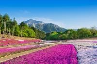 埼玉県 羊山公園 芝桜と武甲山