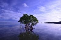 沖縄県 八重山列島 西表島の朝