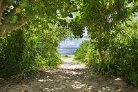 沖縄県 西表島 ビーチへの道