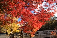 山梨県 富士河口湖町 西湖畔 てくてく橋