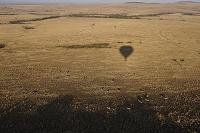 ケニア マサイマラ国立保護区 グラントシマウマと熱気球の影