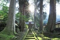福井県 新緑の永平寺 勅使門と太陽