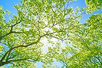 三重県 水沢岳の新緑