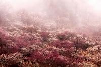 神奈川県 霧の湯河原梅林