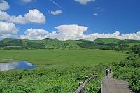 長野県 夏の霧ヶ峰高原 八島湿原