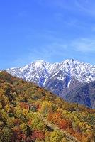 長野県 冠雪した爺ヶ岳と紅葉の山並み