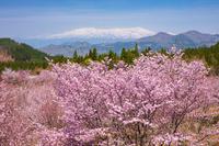 福島県 桜峠と飯豊山