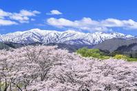 日本 岩手県 雫石川園地の桜並木と山並み