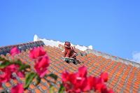 沖縄県 竹富島 木造赤瓦の民家とブーゲンビリアの花