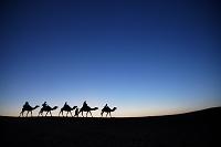 モロッコ シェビ砂丘 ラクダ