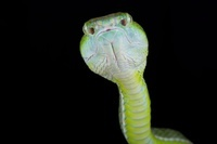 マレーシア 蛇