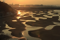 新舞子海岸の干潟