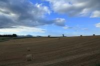 麦ロールと美瑛の丘