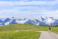 草花とアルプス山脈