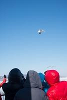 北海道 観光客とカモメ