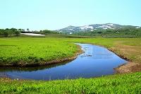 北海道 雨竜町 雨竜沼湿原