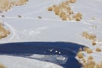 北海道 釧路湿原 コッタロ湿原 タンチョウヅル