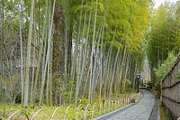 静岡県 修善寺温泉街 竹林の小径