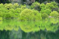 山形県 飯豊町 白川ダム湖