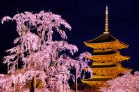 京都府 東寺