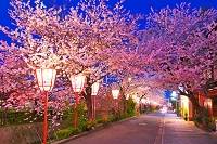 京都府 桜の宮川町