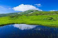 月山弥陀ヶ原湿原