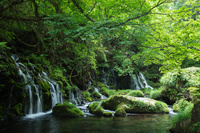 秋田県 にかほ市 新緑と苔の元滝伏流水