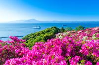 島根県 ツツジ咲く関の五本松公園からクルーズ船と大山を見る