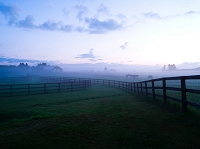 朝もやの牧場