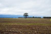 オーストラリア パース 田園風景