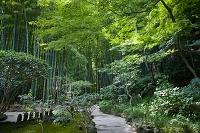 神奈川県 報国寺