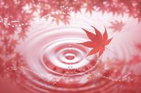水面と紅葉と譜面